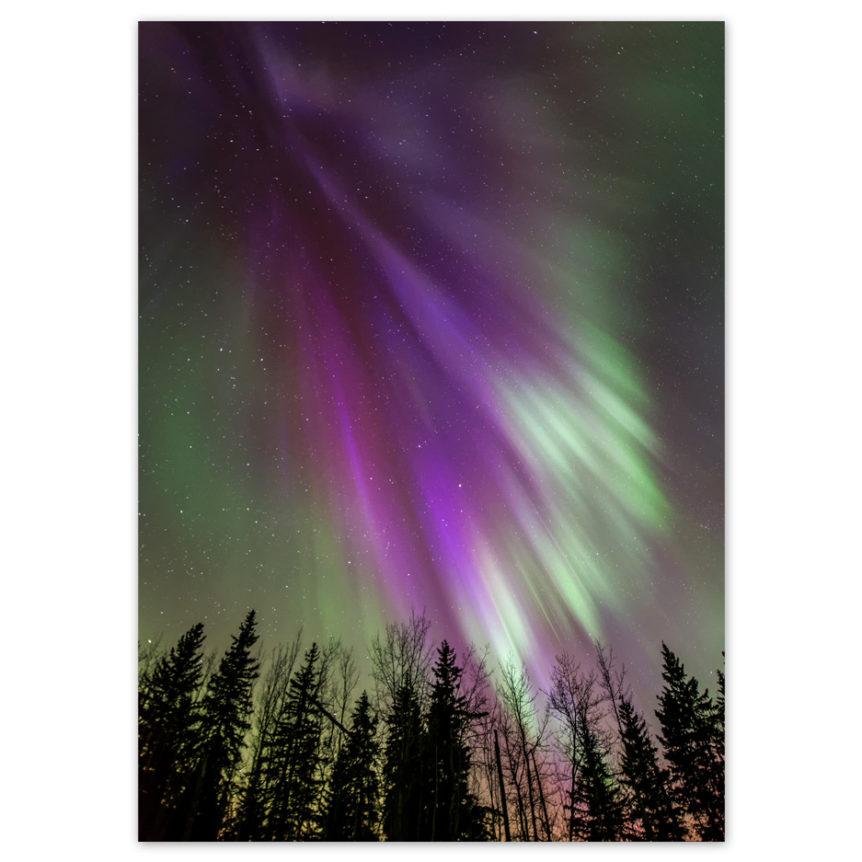 Aurora-Angel-Wings-1
