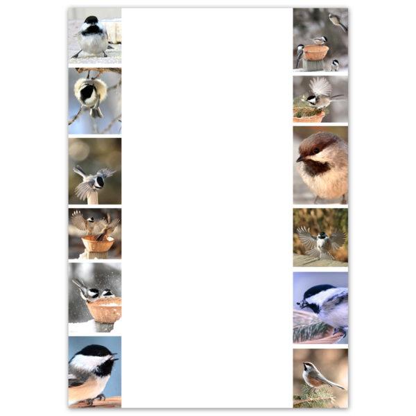Chickadees-2