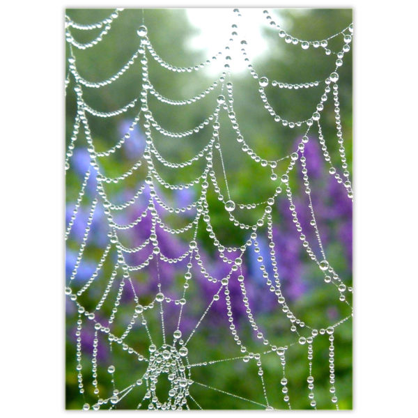 raindrops glistening on a spider web with purple delphinium in the background