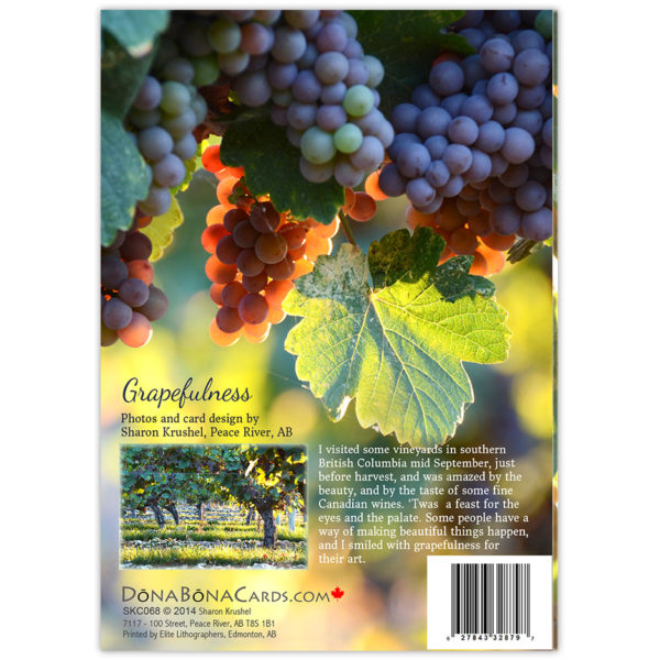 grapes in a Canadian vineyard