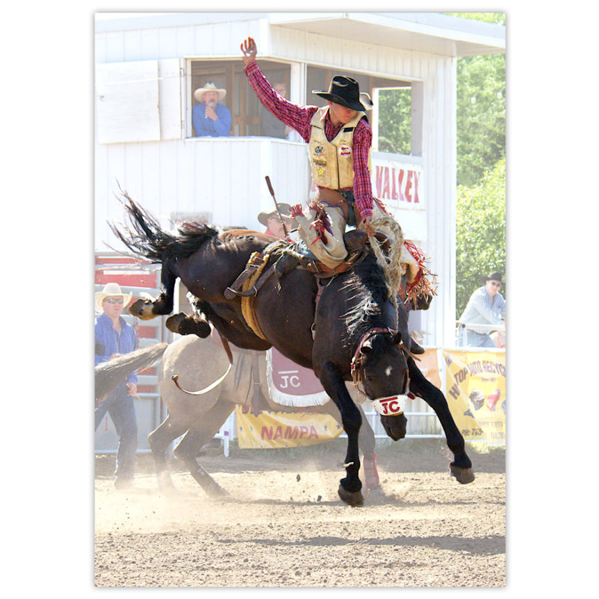 Canadian cowboy bronc bustin' at a rodeo, one hand in the air, the other hanging on tight, his feet up near his buttocks as the horse's hind hooves are hight in the air about to kick back