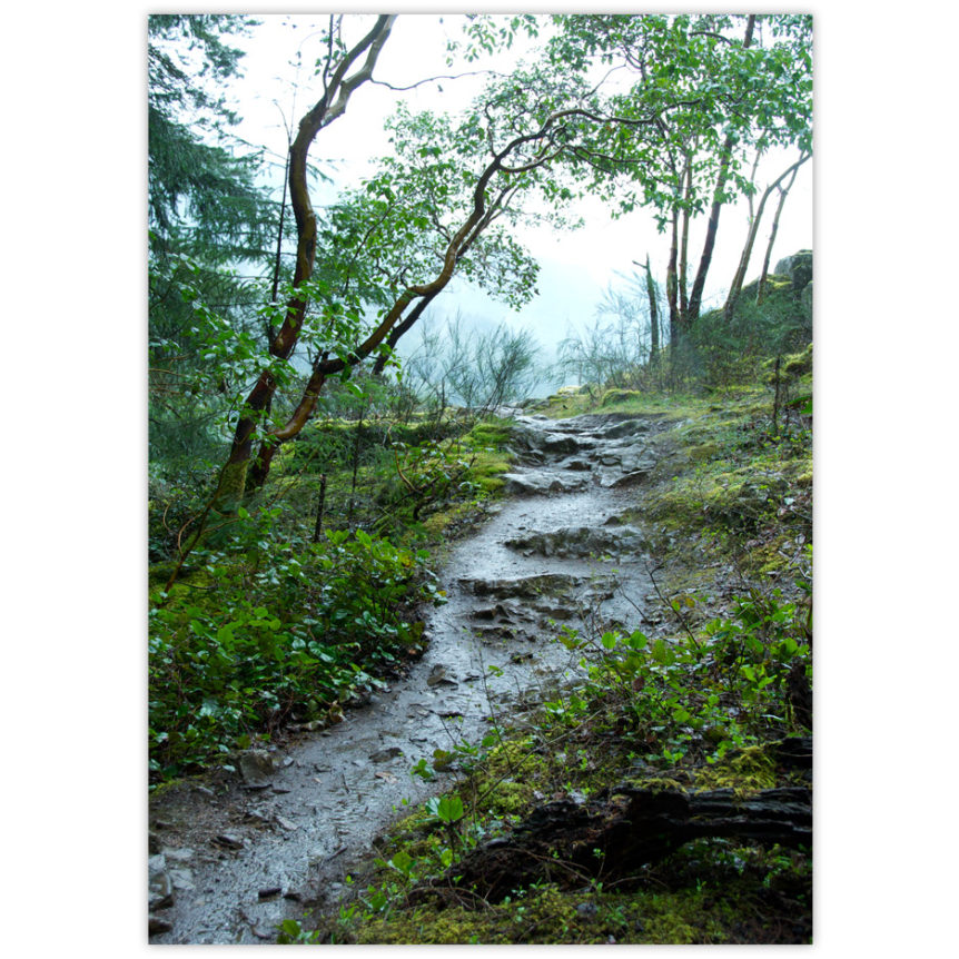 Rainforest path on Vancouver Island, it's raining, the rocky muddy uphill path is shiny and wet, the moss and ground cover are lush green