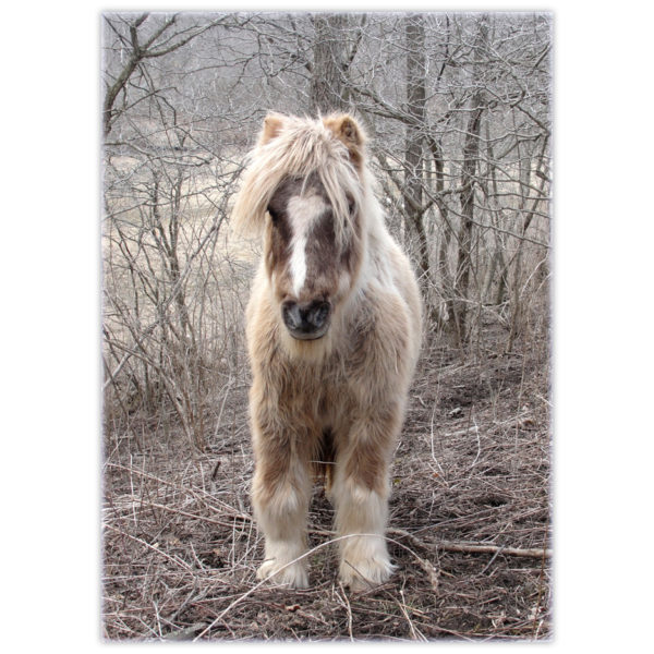 a pony with such long hair he looks like he's part Yak