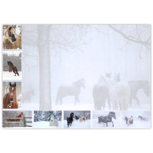 horses playing in the falling snow