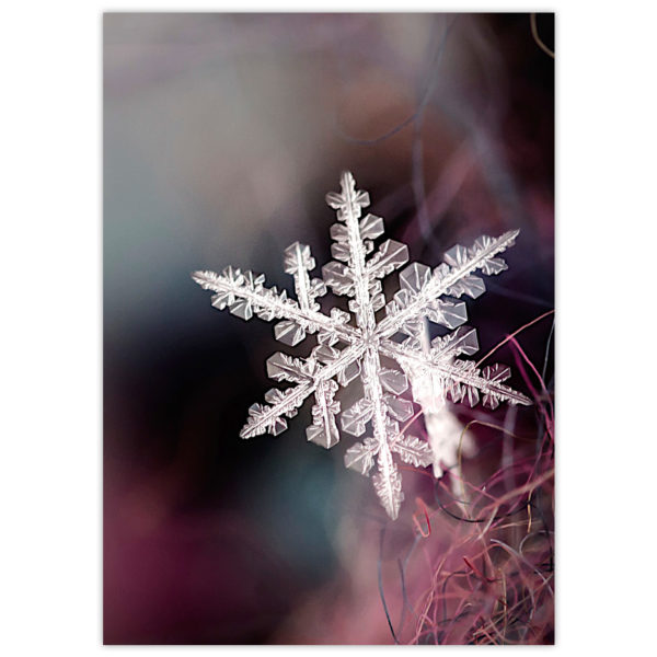 a macro shot of a snowflake resting gently on the fibres of a wine-coloured winter scarf