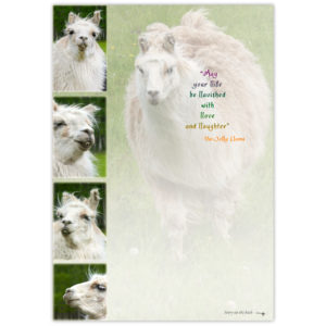 the many happy faces of a buck-toothed llama