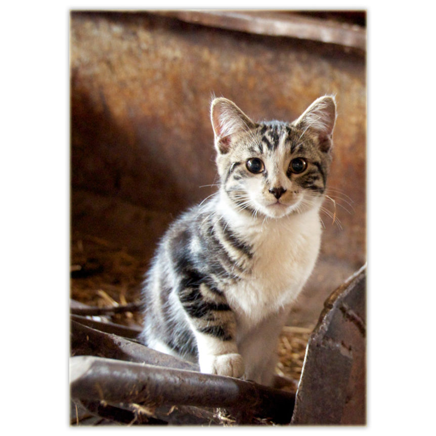 a wild kitten sits on an old piece of farm machinery