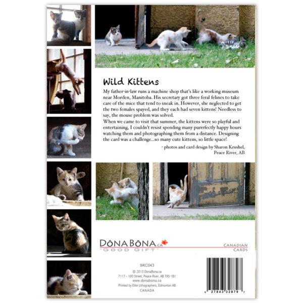 more frisky wild kitten photos