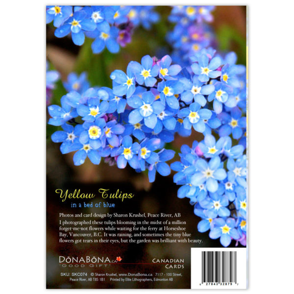 forget-me-not flowers with raindrops in their eyes