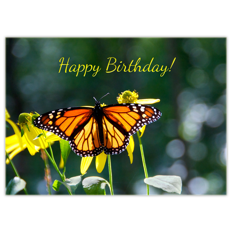 monarch butterfly birthday d nab na cards. Black Bedroom Furniture Sets. Home Design Ideas