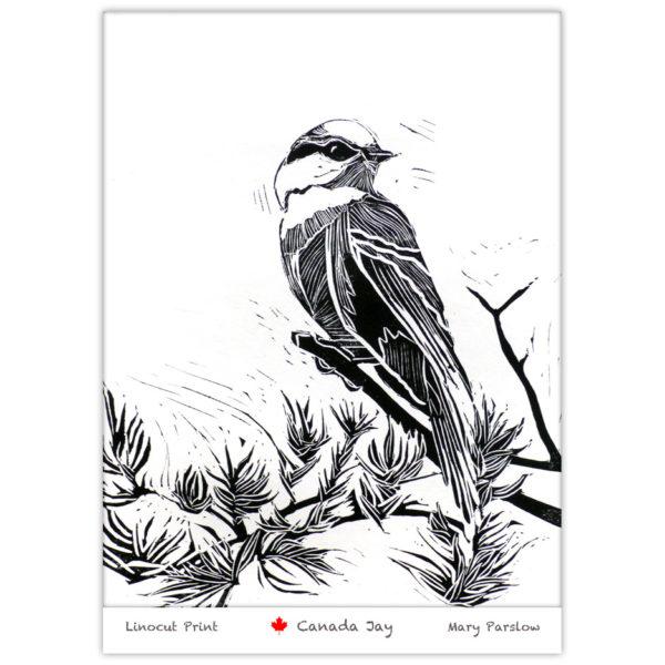linocut print of a Gray Jay Canada Jay Whiskey Jack