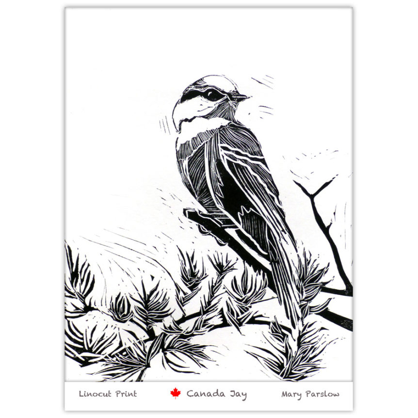 linocut print of a Gray Jay Canada Jay Whiskey Jack
