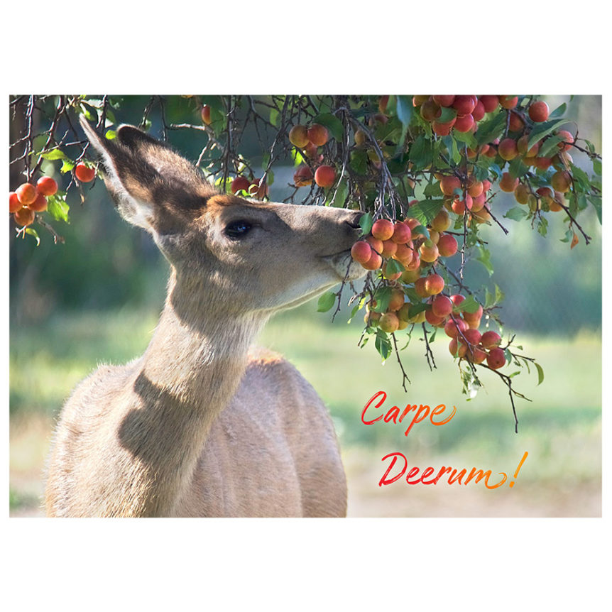 deer eating crabapples off a tree