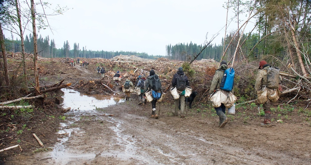 Tree planters walking in to the cut block in the Chinchaga Wilderness