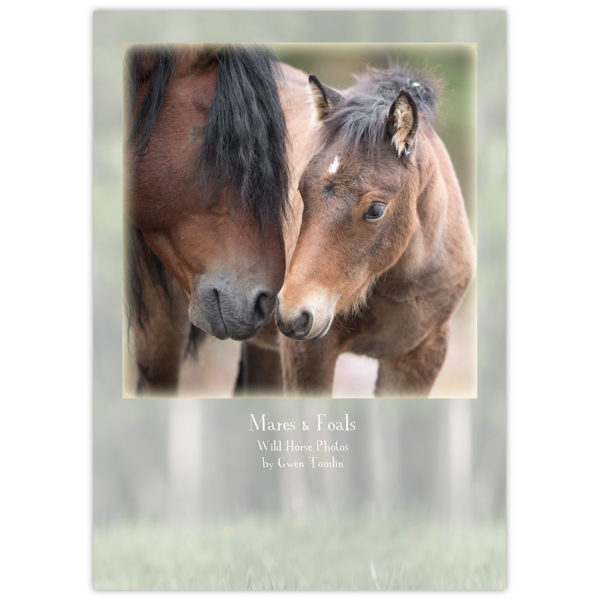 wild horses of Alberta - mare and foal touching noses