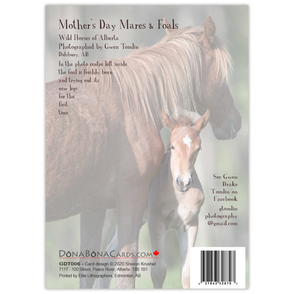 Wild horses of Alberta - mare and foal